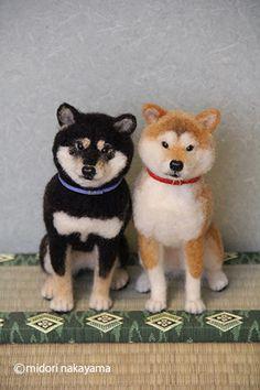 IMG_9352柴犬