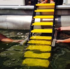 The highest quality dog boat ladders designed and manufactured in the USA by WaterDog Adventure Gear. Pontoon Boat Party, Pontoon Boats, Pontoon Boat Accessories, Ladder Accessories, Camping Accessories, Party Barge, Boating Tips, Buy A Boat, Dog Ramp