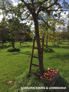 Appeloogst van oude hoogstam appelbomen van Schouten Bomen & Loonbedrijf Outdoor Furniture, Outdoor Decor, Backyard Furniture, Lawn Furniture, Outdoor Furniture Sets
