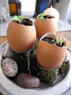 Egg box seedlings...start your seeds then plant your egg..makes a cute display in the meantime:)