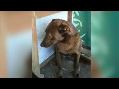 Please Help Save Bear! Sweet Shelter Dog. 8 years - YouTube