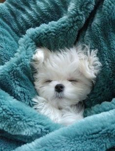 Keeping warm in my turquoise blanket!