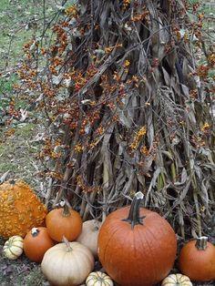 Favorite season: Fall