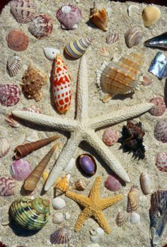 Sea collections