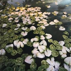 Beautiful and Easy DIY Pond Tire for Your Backyard Karin Uzumaki, Tsuyu Asui, Water Element, Coffee Staining, Exotic Plants, Disney Films, Botany, Spring Time, Decoration