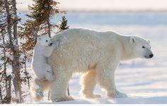 Las mejores fotografías de Naturaleza de 2016