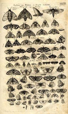 Jonston, Jan: Historiae Naturalis de Insectis Libri III. De Serpentibus et Draconibus Libri II. - Frankfurt : Merian, 1653.
