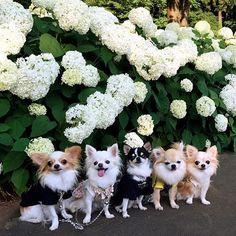 What an adorable bunch! 🐶 @conaruto