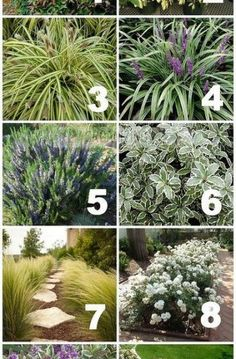 Front Yard Landscaping native drought tolerant plants for your yard, gardening, landscape Mailbox Landscaping, Florida Landscaping, Country Landscaping, Garden Landscaping, Landscaping Ideas, Luxury Landscaping, Landscaping Company, Landscaping Around Pool, Landscaping Software