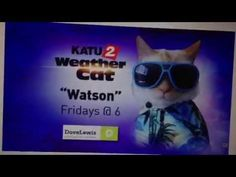 Watson The Weather Cat - Concert