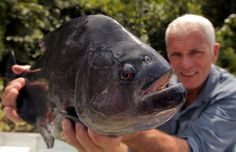 Jeremy Wade with a Black Piranha (the largest piranha he has ever caught – 6 1/2 lbs) on the Padauiri River. - Image Credit: DCL