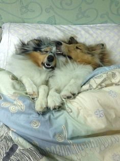 And they show us just how cute it is to snuggle up with your best friend. | 32 Reasons Every Day Should Be National Dog Day