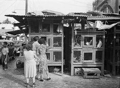 Comprando gallinas en la Plaza de Río Piedras, San Juan, Puerto Rico (1942)