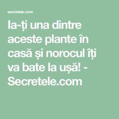 Ia-ți una dintre aceste plante în casă și norocul îți va bate la ușă! - Secretele.com