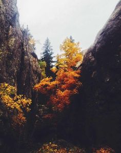 Of hearth and home — mtn-man-diaries: Black Elk Speaks. Pale Tumblr, Beautiful World, Beautiful Places, Autumn Aesthetic, Adventure Is Out There, Autumnal, Belle Photo, The Great Outdoors, Mother Nature