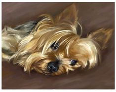 Yorkshire Terrier – Energetic and Affectionate Yorkie Dogs, Chihuahua Puppies, Dogs And Puppies, Toy Dogs, Yorky, Cute Paintings, Beautiful Paintings, Yorkshire Terrier Puppies, Dog Portraits