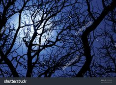 stock-photo-moonlight-through-branches-of-a-tree-11533249.jpg (1500×1100)
