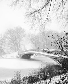 Bow Bridge Central Park by @nyroamer | newyork newyorkcity newyorkcityfeelings nyc brooklyn queens the bronx staten island manhattan