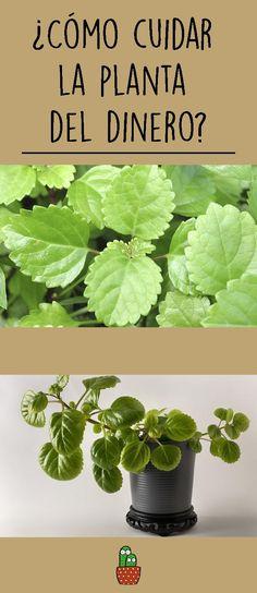 Hydroponic Gardening, Hydroponics, Outdoor Plants, Garden Plants, Beautiful Gardens, Beautiful Flowers, Interior Garden, Design Seeds, Houseplants