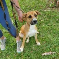Available Pets At Humane Society Of Bay County In Panama City