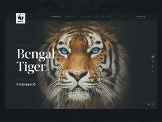 WWF: Header Transition after effects web web design wwf lion animation animal dark ui interface ux header Corporate Website Design, Website Design Layout, Web Layout, Layout Design, Ui Design Patterns, Ui Ux Design, Interface Design, User Interface, Graphic Design