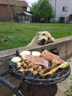 The greatest love story of all time – I Has A Hotdog – Dog Pictures – Funny pictures of dogs – Dog Memes – Puppy pictures – doge I Has A Hotdog Channels Cheezburger Channels [. Cute Puppies, Cute Dogs, Dogs And Puppies, Doggies, Baby Dogs, Animals And Pets, Funny Animals, Cute Animals, Wild Animals