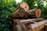 Latvia | Illegal Logging Portal