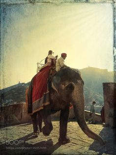Impressions of India  23 by blue_iris from http://500px.com/photo/195357699 - PLEASE TAKE THE TIME TO READ THIS MESSAGE Tourists taking an elephant ride to go up to Amber Fort is a popular activity. Lots of tourists want to have this exotic experience. Is it ethical or not to go on an elephant ride or to even take a selfie with one? Personally I chose not to ride one. Why? Because there has been numerous reports of elephants abuse in countries like India Vietnam Thailand etc. The tourists…