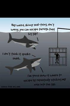 Happy sharks...