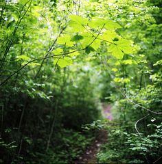 #forest #woods #leaves