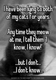Don't let your cats find out about your lies!! #CatAreEvil #barksnrecbc #bnrbc