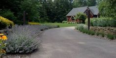 driveway landscape.with privacy - Google Search