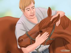 Get Your Horse to Trust and Respect You Step 14.jpg                                                                                                                                                                                 More