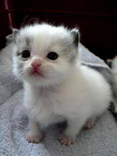 Cute so  Cute