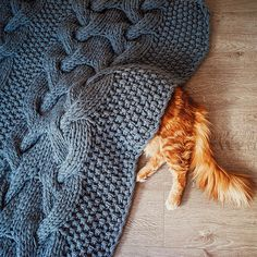 Cutlet The Ginger Cat Is So Majestic He Even Has His Own Hoomin Photographer