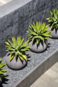 Front yard landscaping is critical if you would like to attain a wholly new overall look and feel for your front porch. Designing the front yard is quite important. Your front yard shouldn't need to be a normal cookie cutter… Continue Reading → Succulents Garden, Garden Pots, Pebble Garden, Succulent Planters, Big Garden, Contemporary Planters, Modern Planters, Agave Attenuata, Agaves