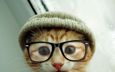 Hat and glasses, essential cat wear