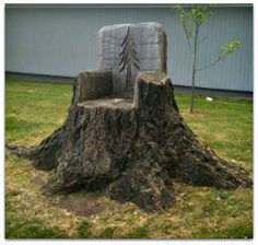 Something to do with those big old stumps!