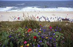 Deutschland Nordfriesische Insel Sylt Wenningstedt Wiese Blumen Sommerblumen Blumenwiese Kliff Strand Sommer Sonne Meer Nordsee