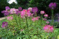 Natural Park, Short Trip, Castle, Nature, Plants, Travel, Beautiful, Gardens, Flowers