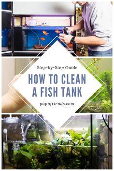 Aquarium Stand, Aquarium Fish, Information About Fish, Fish Tank Cleaning, Water Bucket, Baby Fish, Aquarium Filter, Fresh Water Tank, Water Quality