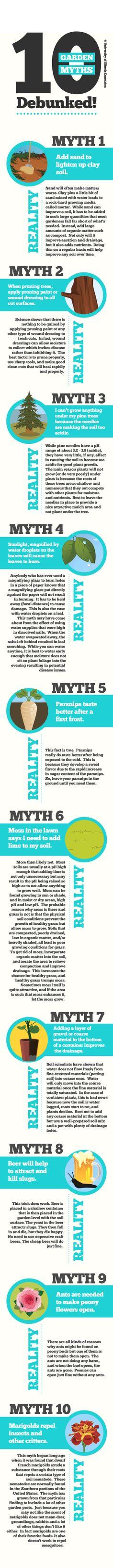 10 Garden Myths Debunked!
