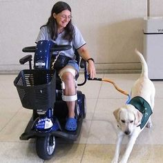 BTL Dog walk leash for use with mobility scooters and wheelchairs