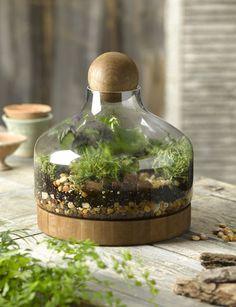 Glass & Wood Terrarium, Large   Gardener's Supply