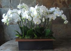 Massive short Phalaenopsis orchid plants in an elegant wooden box. Great for foyers, entry ways on a side table etc. Orchid Centerpieces, Orchid Arrangements, Orchid Pot, Orchid Plants, Balcony Plants, Outdoor Plants, Potted Plants, Asian Party Decorations, Wedding Decorations
