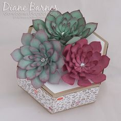 handmade trifold window box succulent card & hexagon box using Stampin Up Oh So Succulent stamp & die sets & Succulent Garden paper pack. By Di Barnes #colourmehappy 2017 Occasions catalogue