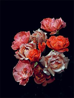 Rose Garden 07 - Graham Lott These are uncut roses, still on the plant, and photographed at mid-day, despite the deceptive lacquerwork effect that suspends them against the dead of night. #photography #art #Graham_Lott