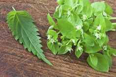 Le erbe selvatiche commestibili spontanee, che crescono nei nostri prati e boschi, contengono sostanze preziose per l'organismo: vitamine, sali minerali
