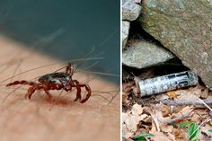 Here are two ways to get rid of ticks in your yard before they make you sick.