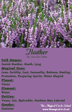Heather Magical Properties - The Magical Circle School - www.themagicalcircle.net